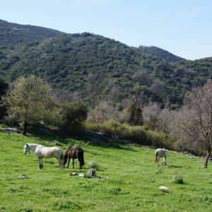 Ištuštėjusi, bet jauki Senoji Peritija: dviejų gyventojų kaimelis Korfu saloje Graikijoje